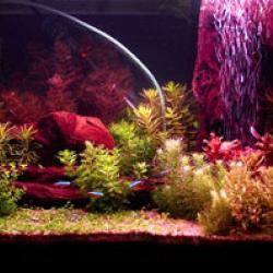sylvania, gro-lux, grolux, growlux, grow-lux, fish lamp, fish lighting, aquarium lighting,